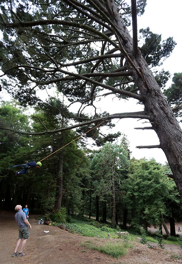 treeswinging19