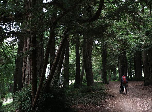 treeswinging22